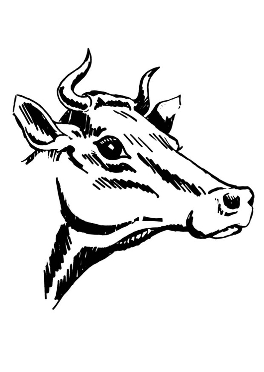 Coloring page cow with horns