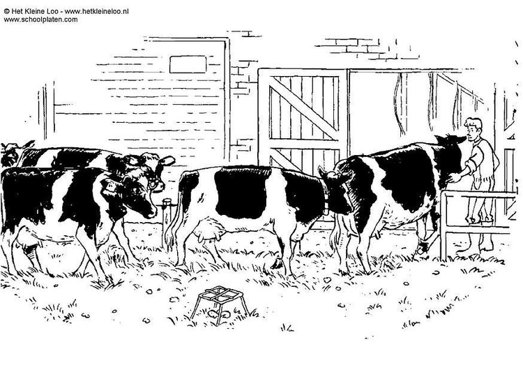 Coloring page cows