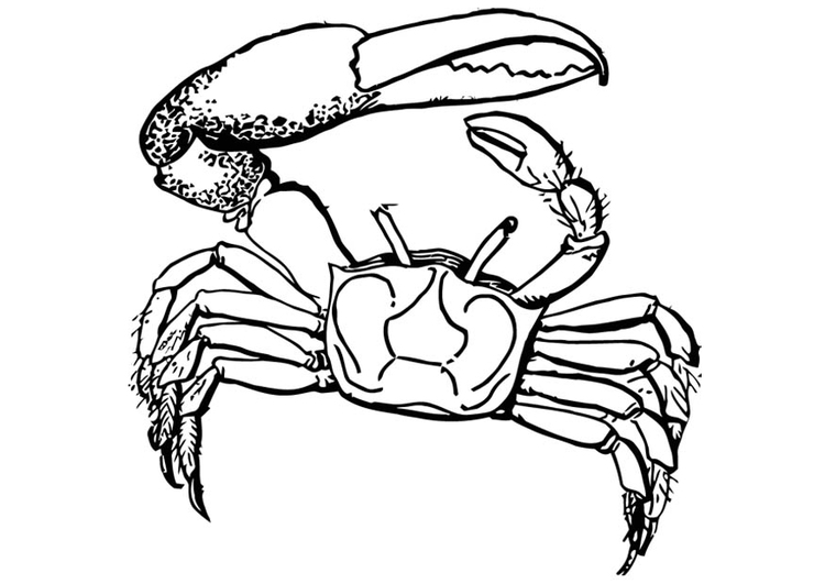 Coloring page crab