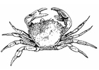 Coloring pages crab