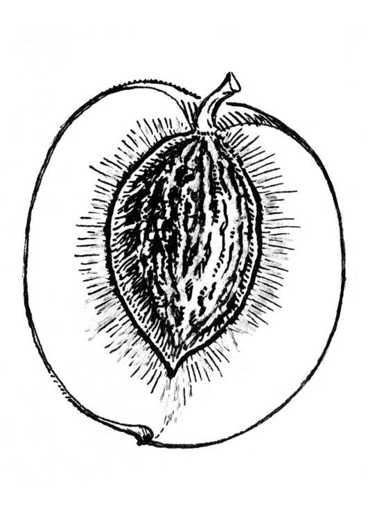 cross section of peach