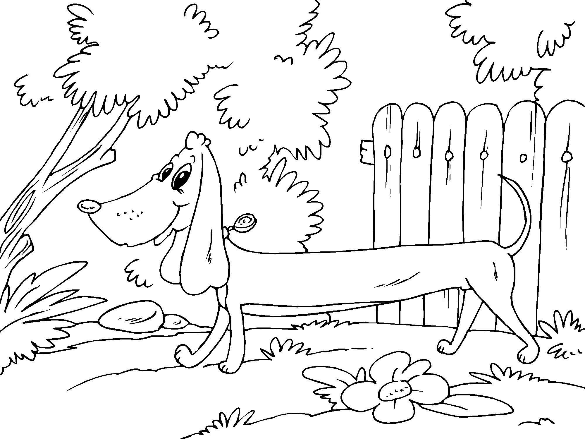 Uncategorized Dachshund Coloring Page coloring page dachshund img 22681 download large image
