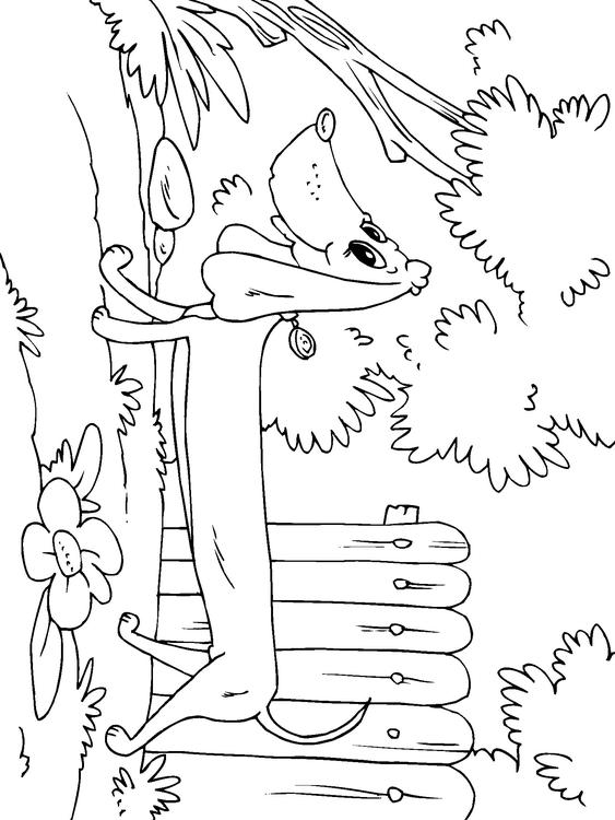 lps dachshund coloring pages printable