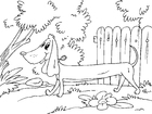 Coloring pages dachshund