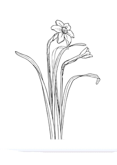 Coloring page daffodil
