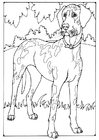 Coloring page Danish dog