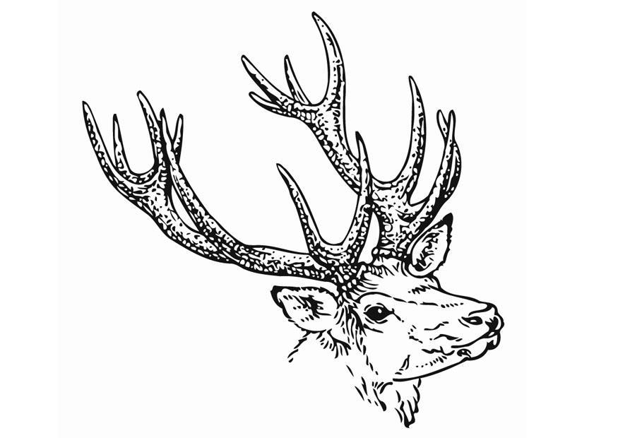 coloring page deer  img 12904