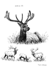 Coloring pages Deer