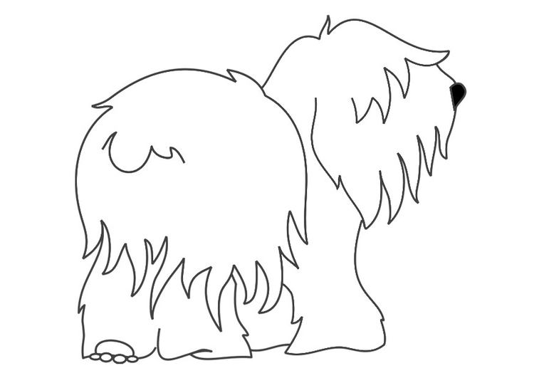 Coloring page dog - bobtail