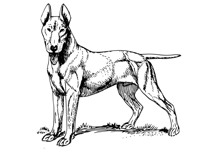 Coloring page Dog - Bull Terrier
