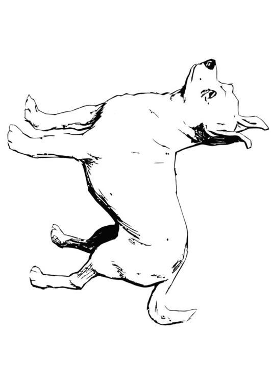 Coloring Page Dog Chihuahua Img 13704