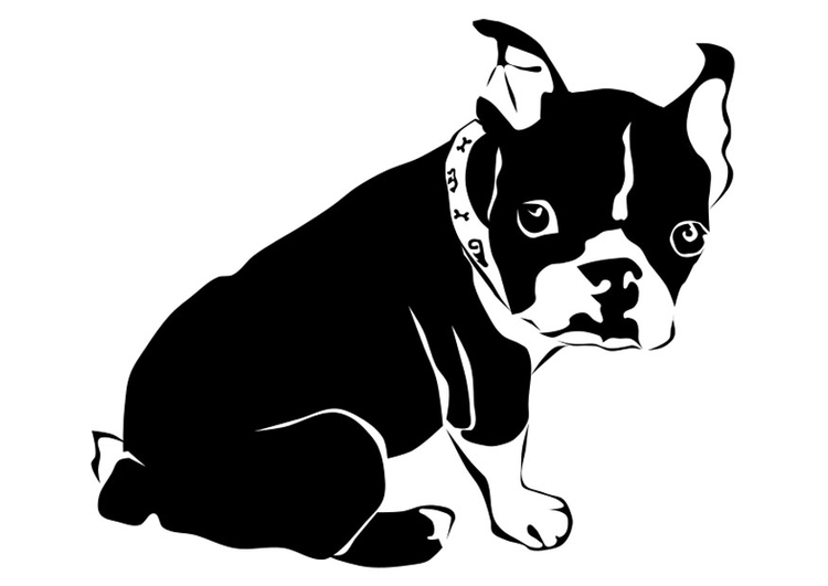 Coloring page dog - French bulldog