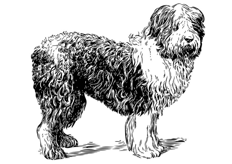 Coloring page Dog - Polish Sheepdog