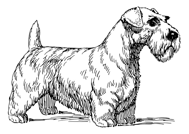Coloring page dog - Sealy Hamterrier