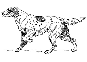 Coloring page dog - setter
