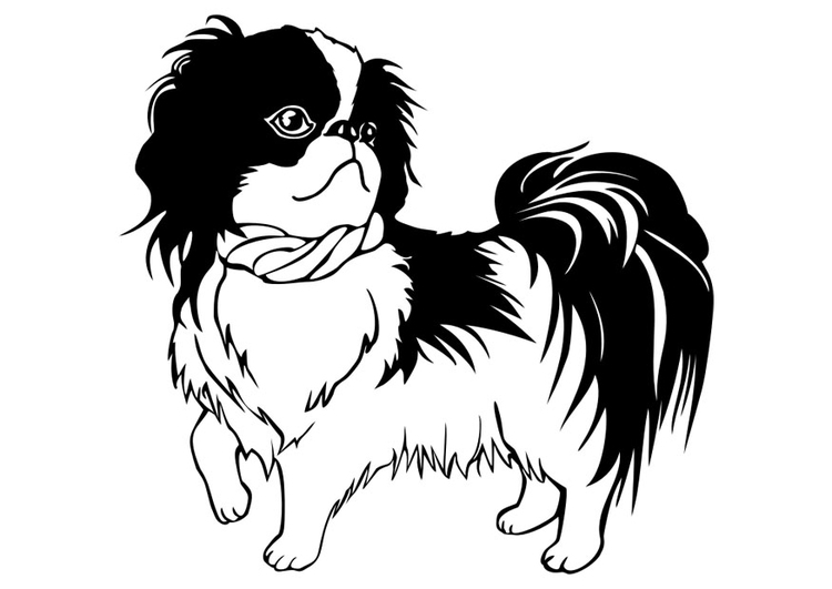 Coloring page dog - Shih Tzu