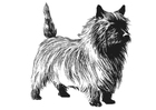 Coloring page Dog - Terrier