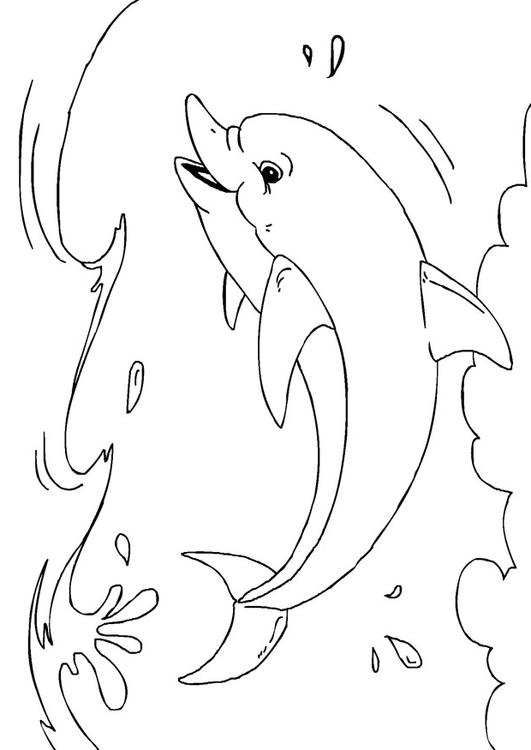coloring page dolphin free printable coloring pages