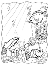 Coloring pages dolphins and fish