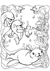 Coloring page dolphins with seal