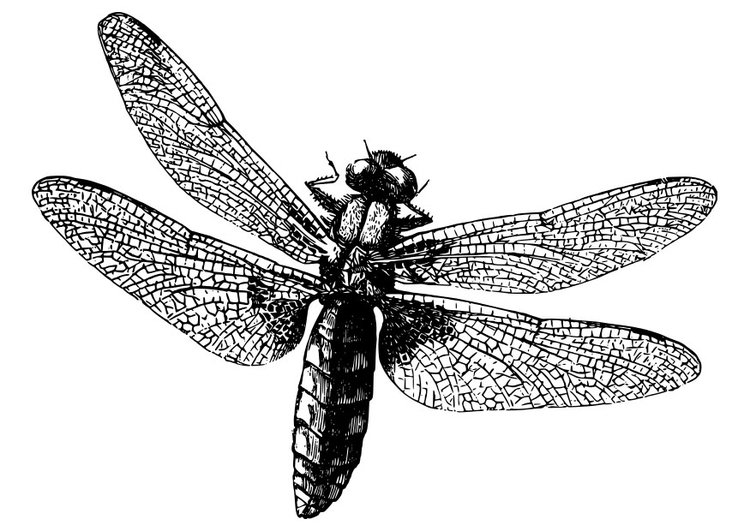 Coloring page dragonfly