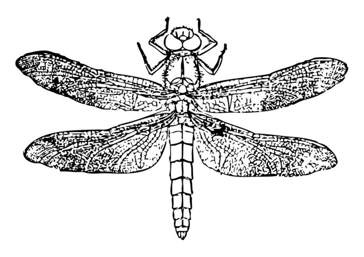 Coloring page dragonfly - img 28461.