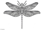 Coloring pages dragonfly