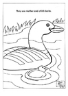 Coloring pages ducks