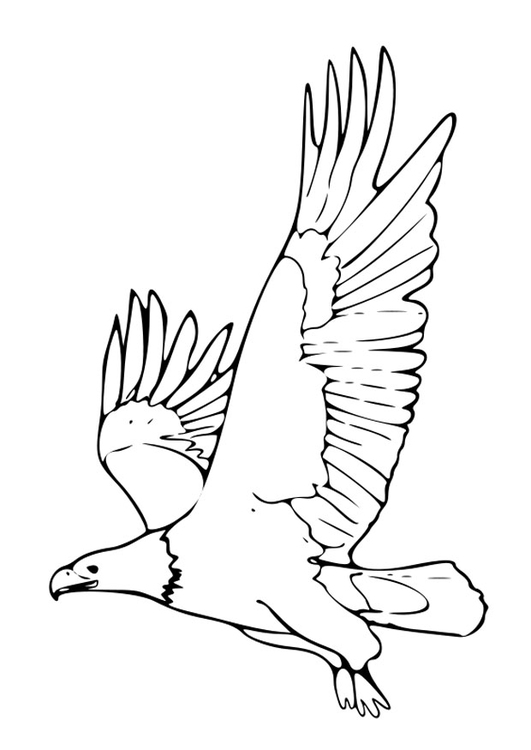Coloring page eagle - free printable coloring pages