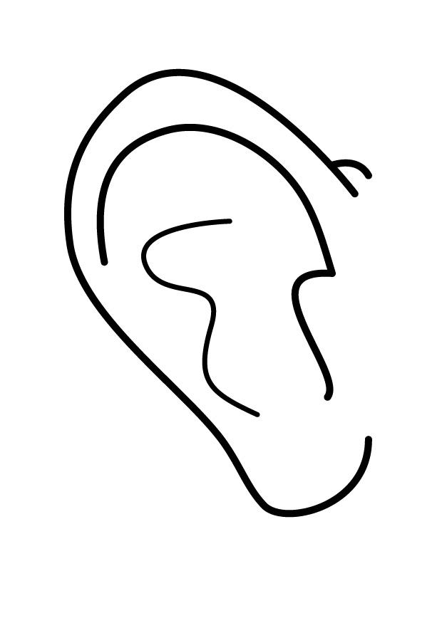 ear  620x875   Ear Coloring Page