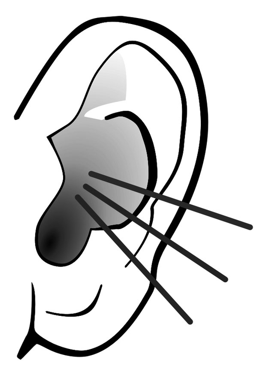 Coloring page ear - sound