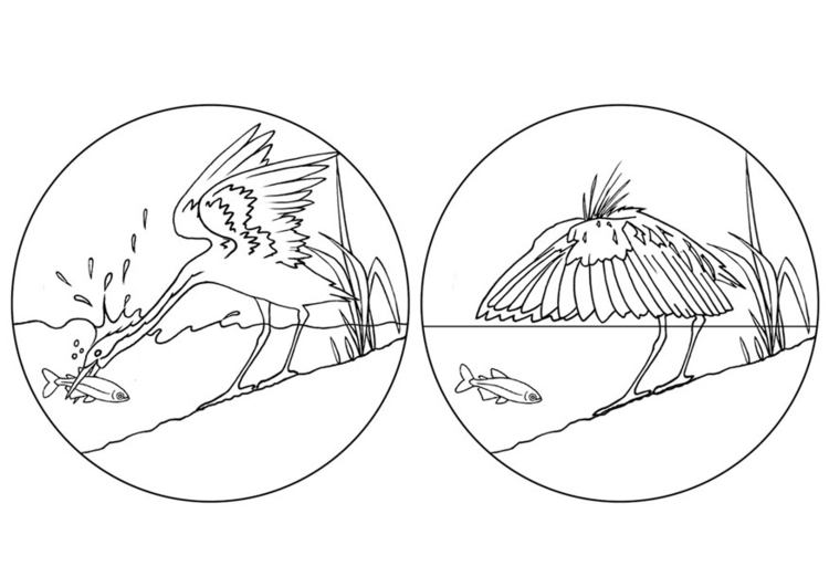 Coloring page egret fishing