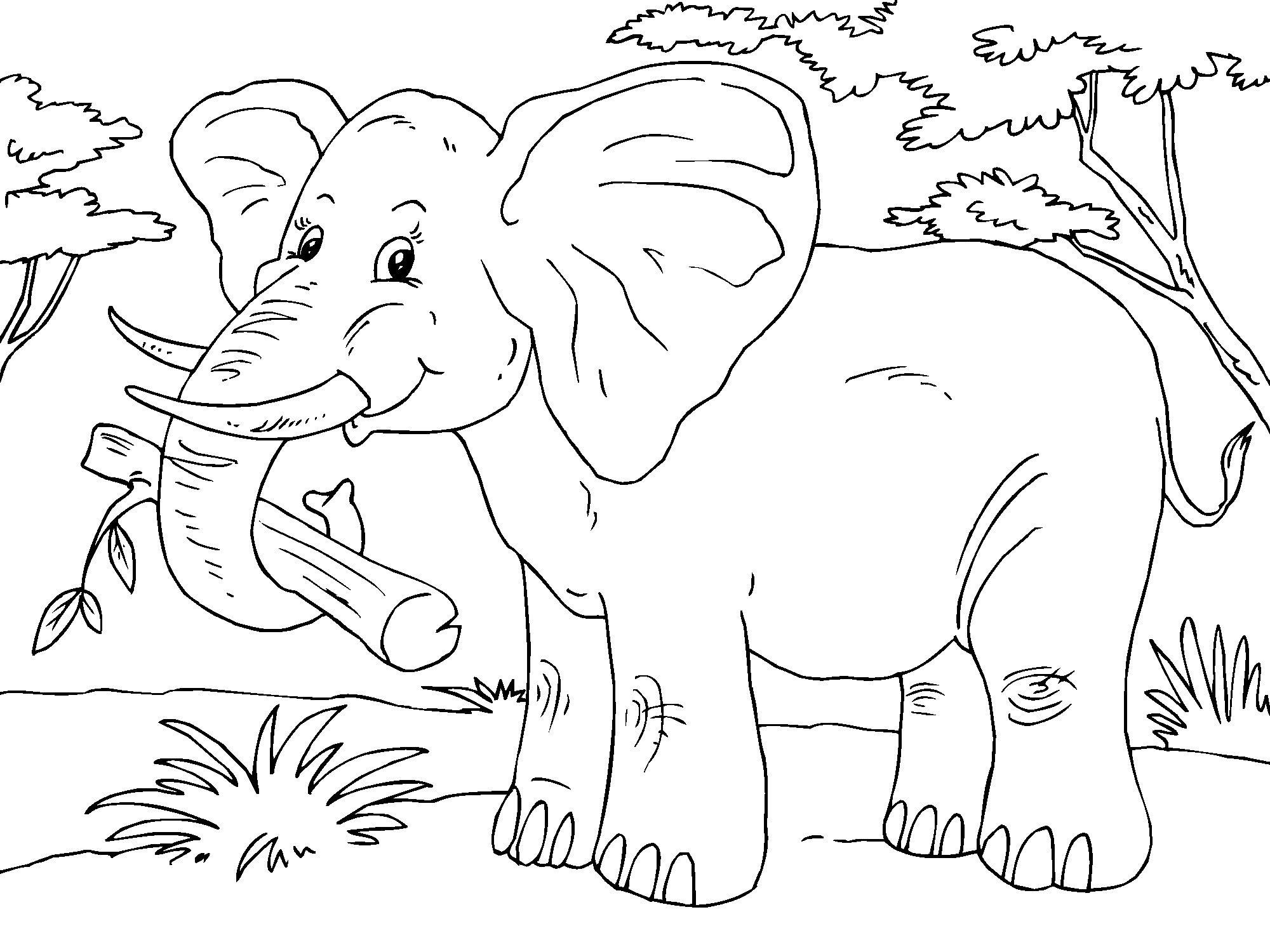 coloring page elephant img 23015