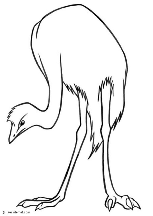 Coloring page emu