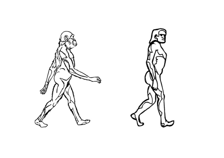Coloring page evolution
