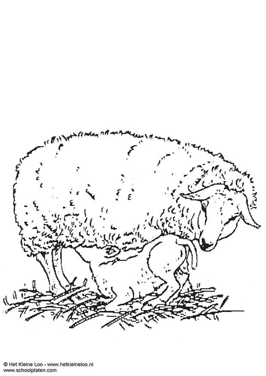 Coloring page ewe with lamb