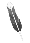 Coloring page feather