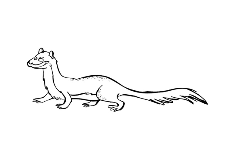 Coloring page ferret