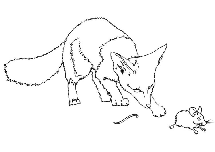 Coloring page field mouse without tail