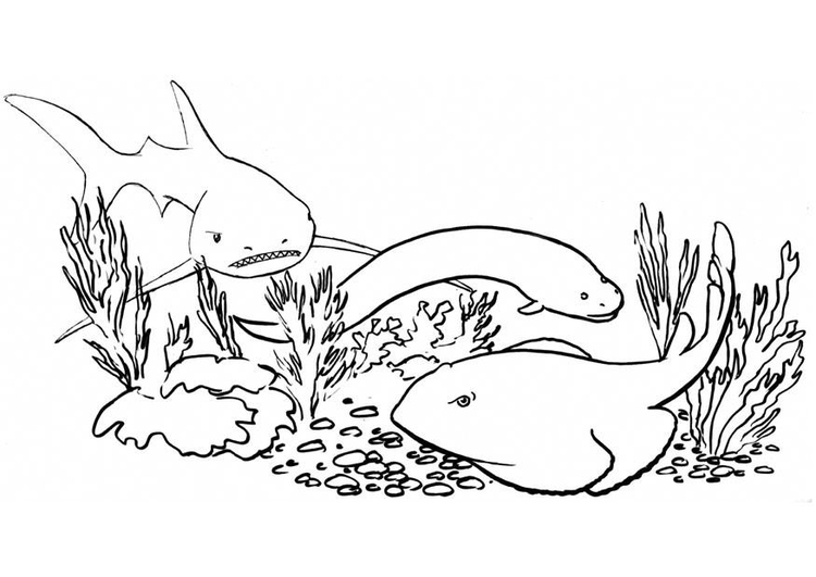 Coloring page fish and sharks