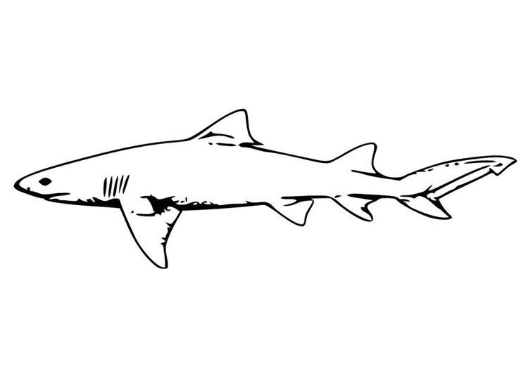 Coloring page fish - shark