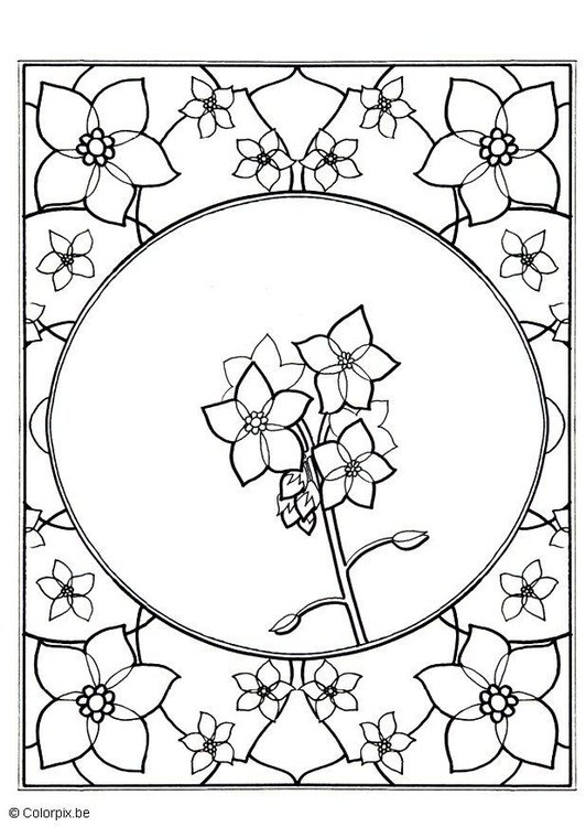 Coloring page forget-me-not