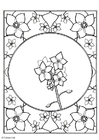 Coloring pages forget-me-not