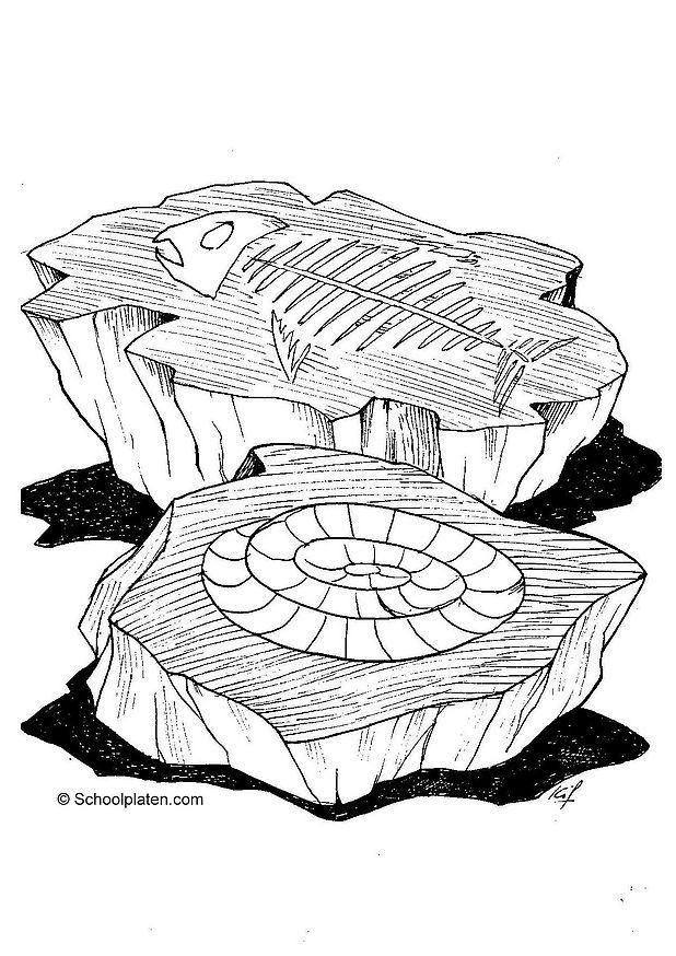 Coloring Page Fossil
