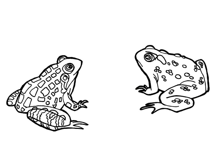 Coloring page frogs - img 9685.