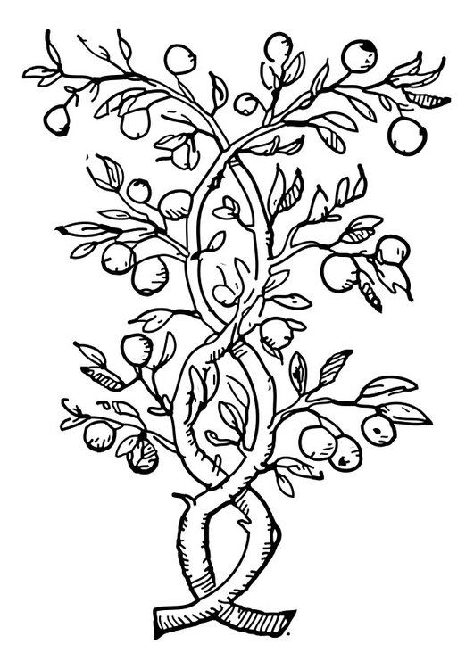 Coloring page fruit tree
