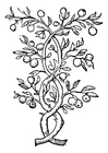 Coloring pages fruit tree