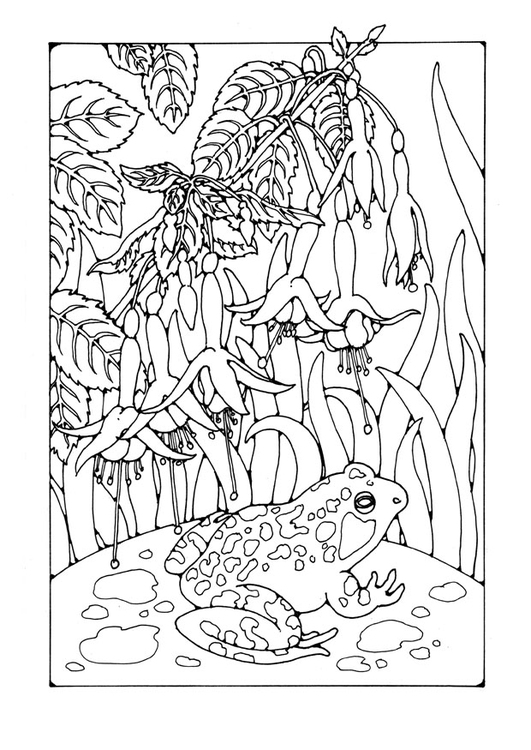 Coloring page fuchsia with frog