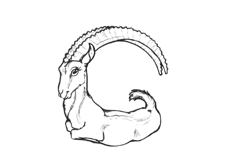 Coloring page g-goat