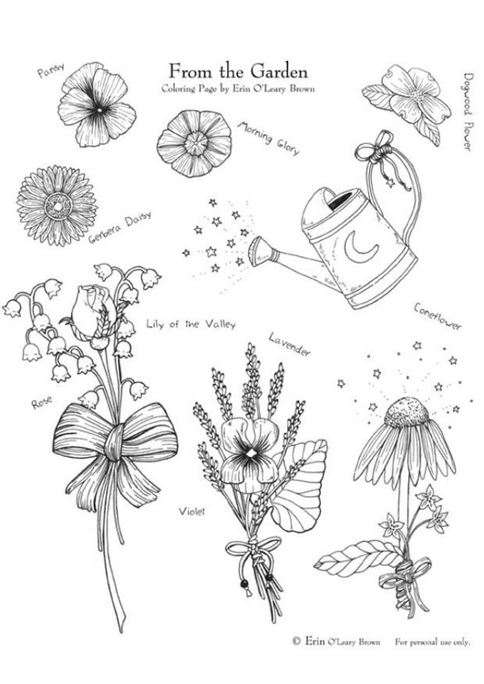 Coloring page garden flowers